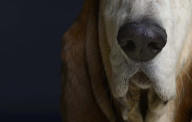 Suchmaschinenoptimierung Dortmund - Symbolbild mit Hundenase