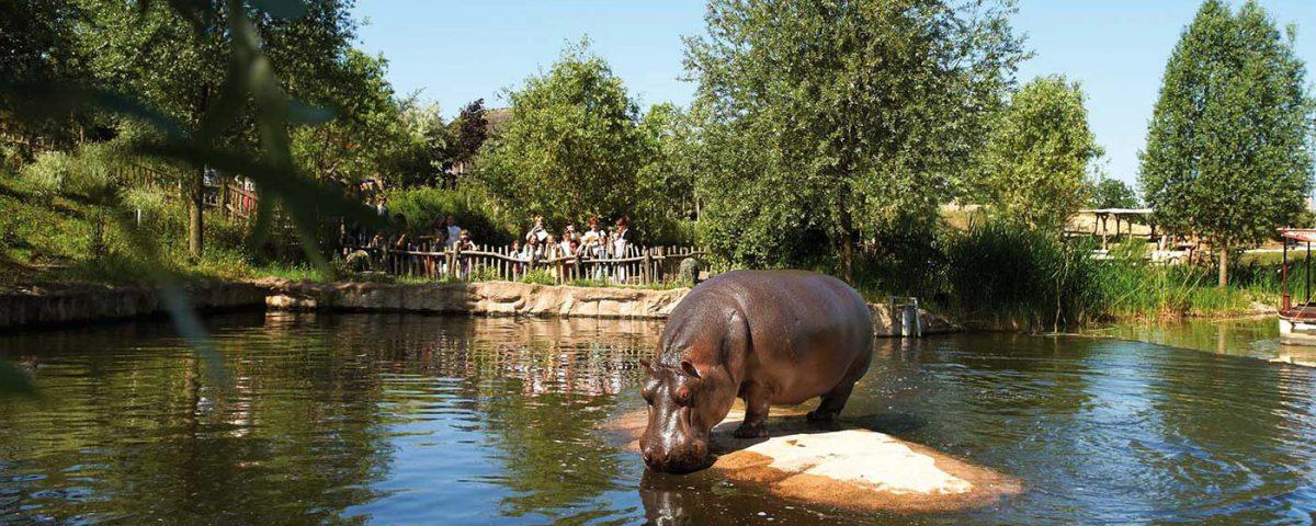 Fotoshooting der Flusspferde in der ZOOM Erlebniswelt Gelsenkirchen